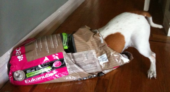 A Beagle in a dog food bag